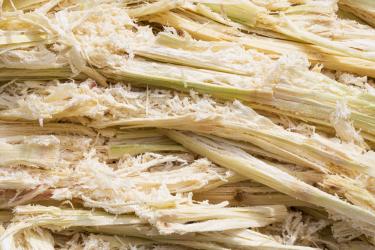 Faserüberreste des Zuckerrohrs