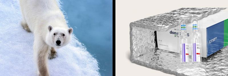 Luft dient dem Eisbär als Isolator