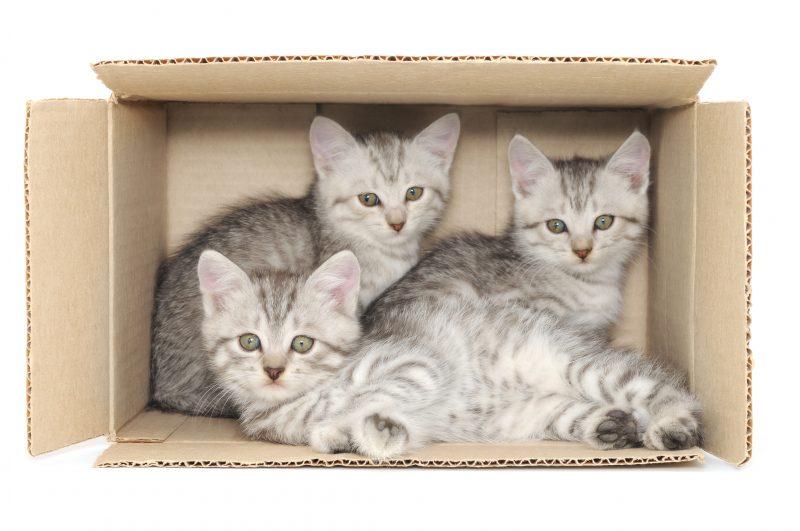 warum katzen kartons lieben medewo blog. Black Bedroom Furniture Sets. Home Design Ideas